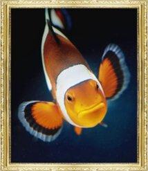 イケ魚パラダイス