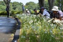 国営昭和記念公園 サギソウまつり「サギソウスタンプラリー」