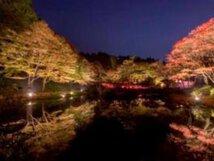 六甲高山植物園 夜の紅葉散策&ザ・ナイトミュージアム