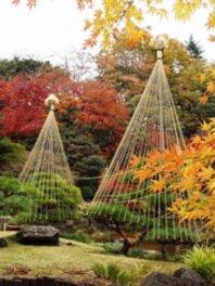 【紅葉・見ごろ】旧古河庭園