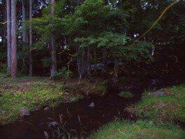 自然再生プロジェクト ホタルの森づくり