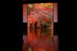 岩倉実相院門跡の紅葉