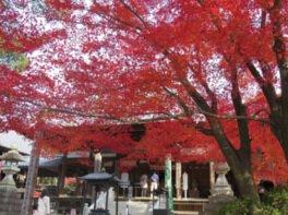 犬山 寂光院の紅葉