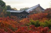 【紅葉・見頃】大本山 東福寺