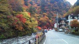 梅ヶ島温泉の紅葉