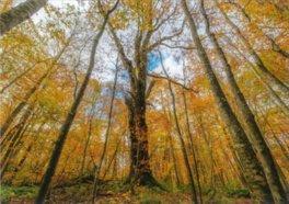 白神山地 岳岱自然観察教育林の紅葉