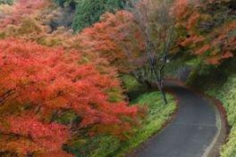 吉野山(下千本)の紅葉