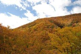 湯の丸高原の紅葉