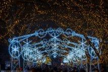 OSAKA光のルネサンス2017 中之島イルミネーションストリート
