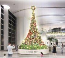 Joy Blooming Christmas