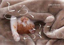 ベルメゾン「とろけるようなシリーズ」で猫とお昼寝!@保護猫カフェ「ネコリパブリック」:大阪心斎橋