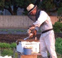 街でミツバチを飼うということ