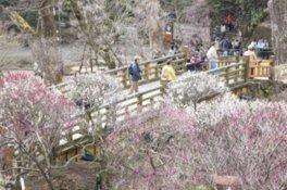 ひと足早く春を迎える熱海の梅の名所