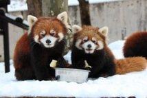 雪の動物園