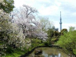【臨時休園】向島百花園の桜