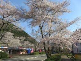 寺尾ヶ原千本桜公園の桜
