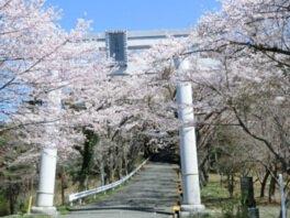 【駐車場封鎖】愛宕山(山頂)の桜