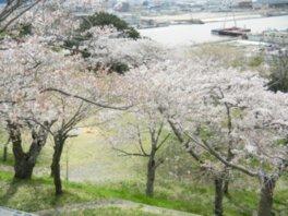 日和山公園の桜(宮城県)