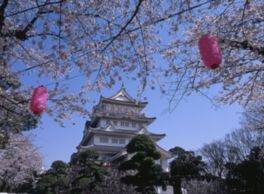 亥鼻公園の桜