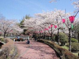 城山公園の桜(栃木県佐野市)