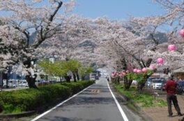 満開の桜のトンネルを楽しめる