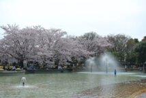 【桜・見頃】ふなばしアンデルセン公園