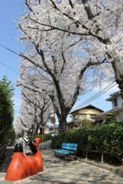 桜土手公園の桜