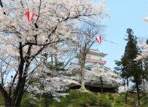 【桜・見頃】千秋公園