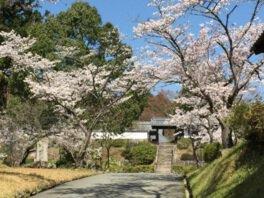 【桜・見頃】柳生芳徳禅寺周辺