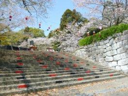 舞鶴公園(宮崎県)の桜
