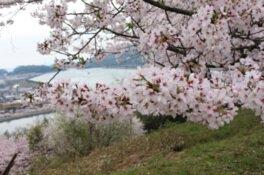 古城山公園の桜