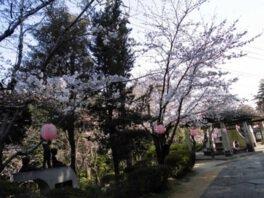 鶴形山公園の桜