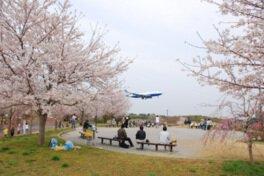 成田市さくらの山の桜