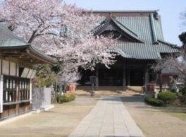 宗吾霊堂(境内)の桜