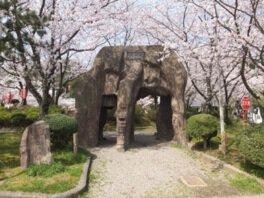 小浜公園の桜