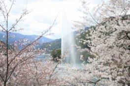 市房ダム湖周辺の桜