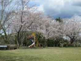 羽黒山公園の桜(茨城県)
