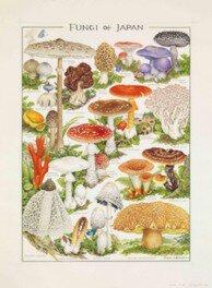 小林路子 菌類画の世界 ~きのこに会いにいきましょう!~