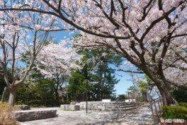 西公園の桜(福岡県)