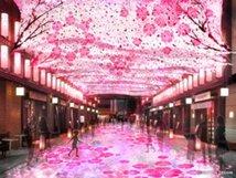 日本橋 桜フェスティバル~新たに出会う、日本橋、八重洲、京橋~