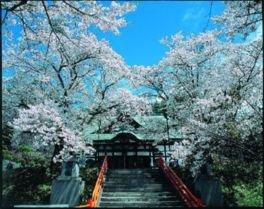 【参拝休止】遠野福泉寺の桜