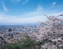 水道山の桜