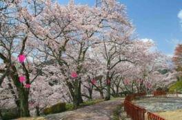 城山公園の桜(岡山県)