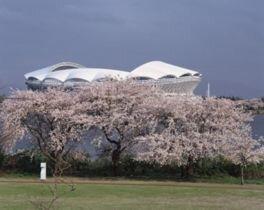 鳥屋野潟の桜