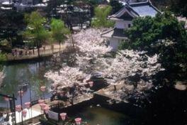 亀城公園の桜(茨城県)