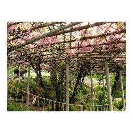 鶴形山公園