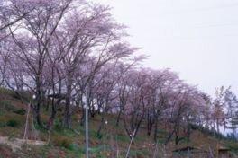 万寿山公園