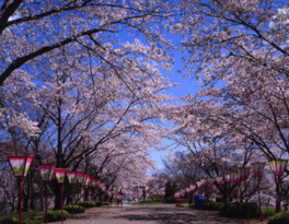 早掛沼公園