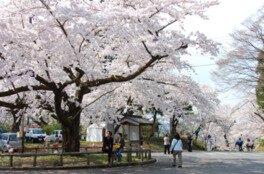 三戸城跡城山公園