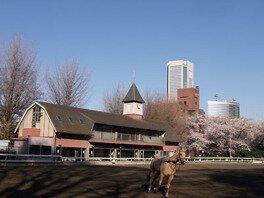 東京乗馬倶楽部